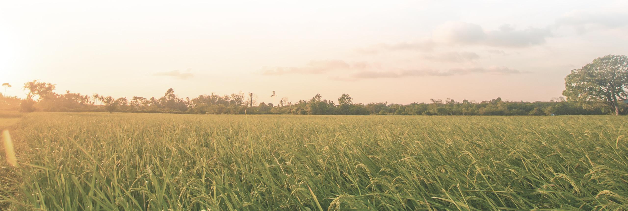 produzione riso riseria vendita ingrosso